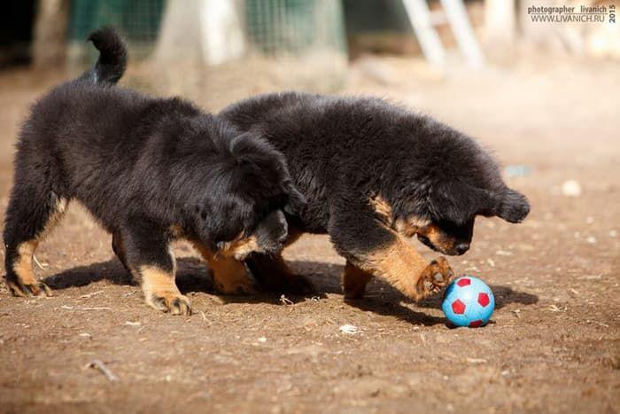 тибетики с мячом 2.jpg