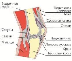 Су-джок терапия при артрозе коленного сустава движений суставов артриты еще несколько показаний гипербарической оксигенации хирургии ос