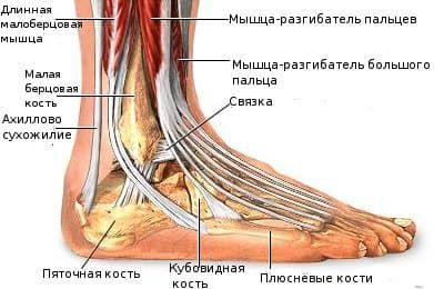 Если болит сустав стопы связки колено как лечить